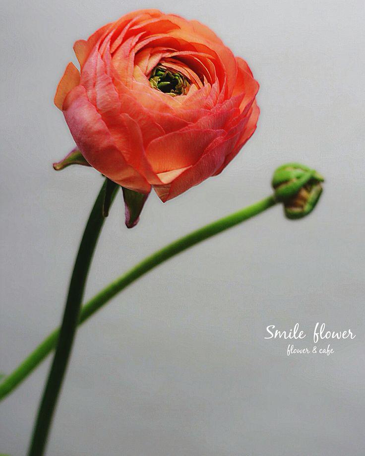 """여의도 스마일플라워앤카페 색이 너무이쁜 아네모네 . 굿밤되세요  kakao id. 스마일플라워앤카페 블로그. http://blog.naver.com/smile_flower_cafe 인스타. https://instagram.com/smile__cafe . """"당신의 스마일을 보고싶어요"""" 'for your smile' SMILE FLOWER . #smileflower #smilecafe #flowercafe #smile #flower #florist #flowershop #handtied #여의도 #여의도스마일 #여의도플라워 #선인장  #여의도꽃집 #스마일플라워 #스마일플라워카페 #플라워카페 #플로리스트 #꽃 #플라워 #핸드타이드 #꽃스타그램 #인테리어 #플라워클래스 #가드닝 #플라워데코 #졸업식 #도미니카"""