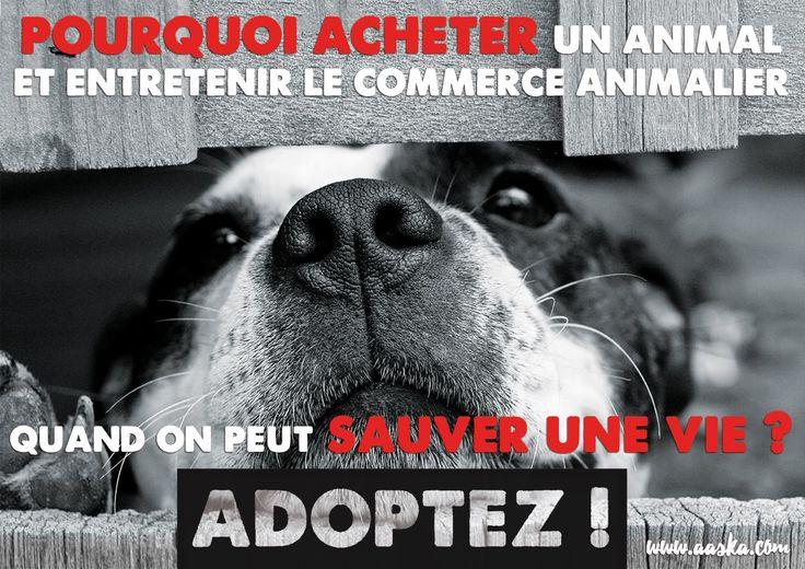 ACTU Animaux - N'achetez pas, adoptez ! Je ne rigole pas avec les animaux et encore moin avec l'abandon