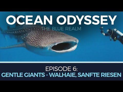 Ocean Odyssey – Gentle Giants – Walhaie, sanfte Riesen Walhaie geben Forschern bis heute Rätsel auf. Man weiß zwar prinzipiell, in welchen Regionen der Welt die Haie leben, wo genau sie ihre Jungen zur Welt bringen und aufziehen jedoch nicht. Um das Rätsel um diese erstaunliche...