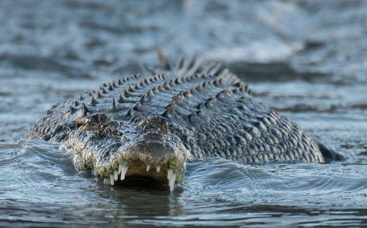 Крокодилы заживо съели священника, показывающего «чудеса Иисуса»