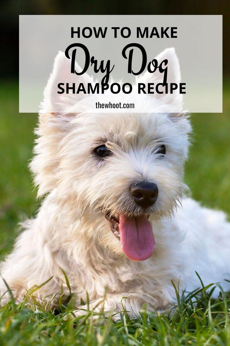 Diy dry dog shampoo homemade recipe the whoot in 2020