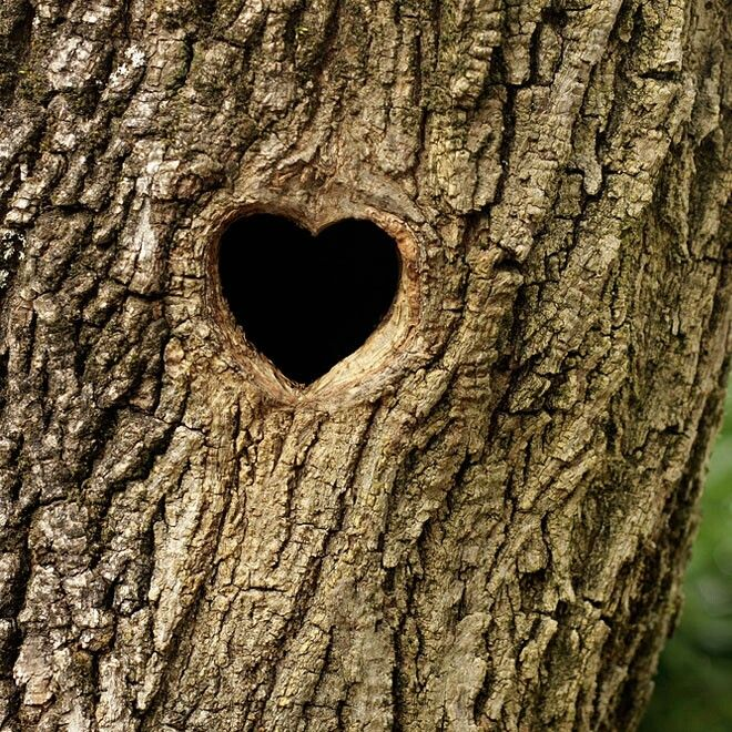 Heart hole.. (like my character's dad taught her -- the hearts of the trees!) see my book Heart of Clouds! (in apple itunes store)