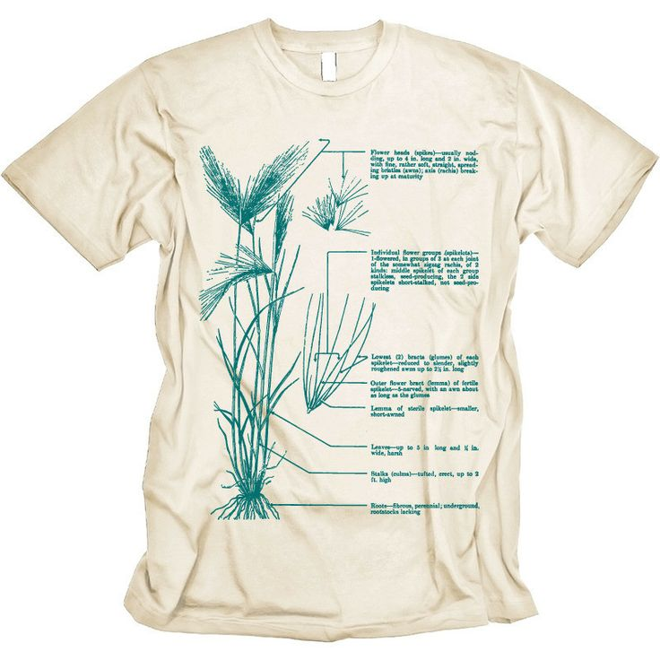 Beer T-shirt Barley Plant Diagram Graphic