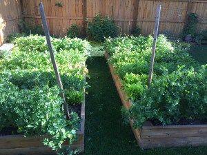 Garden Geek & Farmer's Market Fanatic - #health  #Fresh #FarmersMarket