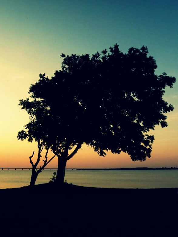 My best tree-photo. From Klagshamn, Sweden   #chicagocamsphoto #chicagocamsfoto