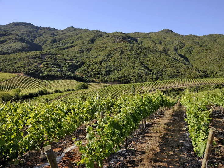 Apalta Valey, located in the very center of the Colchagua valley.