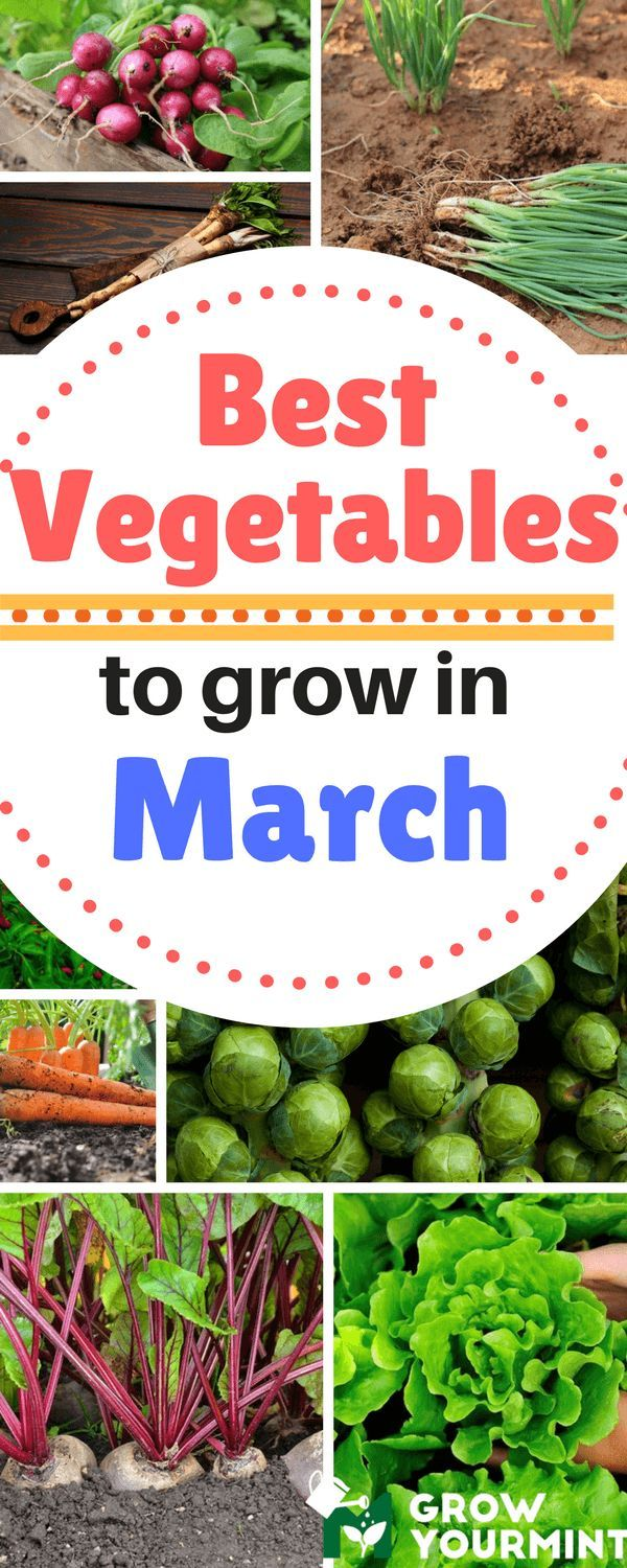 Best Vegetables To Grow In March Which You Simply Cannot Pass Up! #vegetable #march #garden #gardening