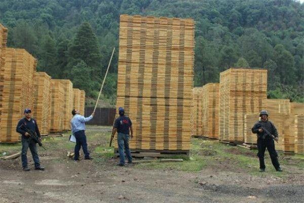 Profepa recupera madera sustraída de áreas protegidas - http://notimundo.com.mx/estados/profepa-recupera-madera-sustraida-de-areas-protegidas/7063