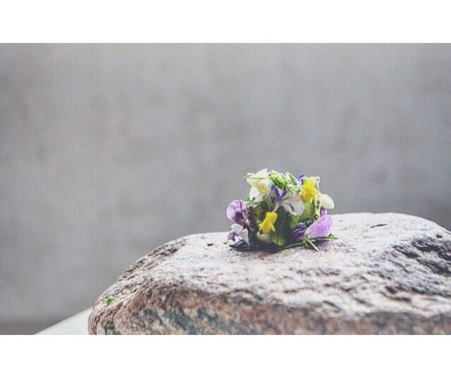 Cucumber ✖️ Wild flowers