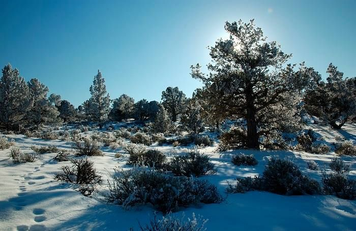 Juniper & Pine Country, Three Sisters Area, OR   /   oiys