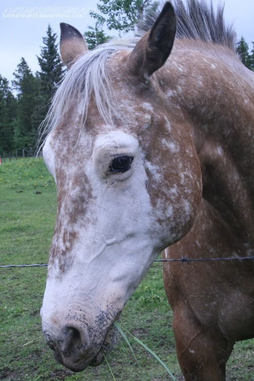 Horse Markings | ... Face Markings POST AWAY!! at the Horse Chat forum - Horse Forums