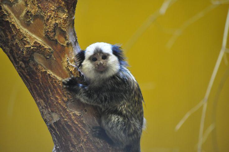 Zoo Sosto - Nyiregyhaza, Hungary