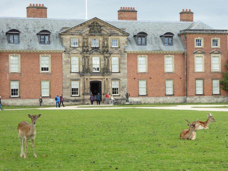 'Deer ,Deer, Deer'!, Dunham Massey Altrincham.Cheshire. Photo C Randle.2014