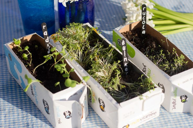 Voor deze plantenbakken hoef je niet naar het tuincentrum, maar naar je supermarkt! Je maakt ze namelijk van een gewoon melkpak. Uit: de Coop Keukentafelgids Lente 2014.