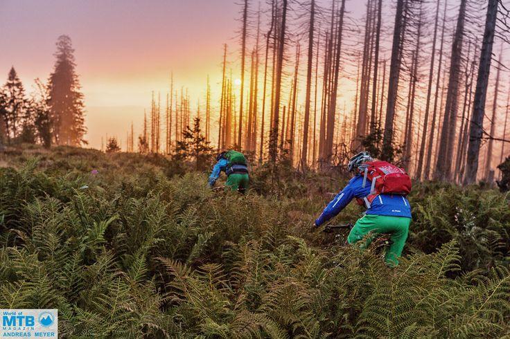 Der vielleicht schönste Sonnenaufgang in diesem Jahr auf dem Dreisessel – Die aufgehende Sonne bricht sich im Morgennebel in den vom Borkenkäfer angeschlagenen Fichten