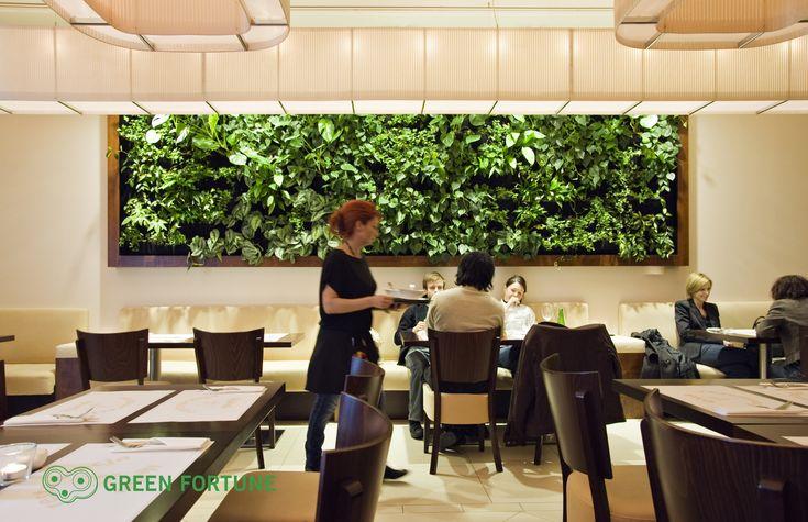 Green Fortune plantwall / vertical garden in restaurant, food retail.