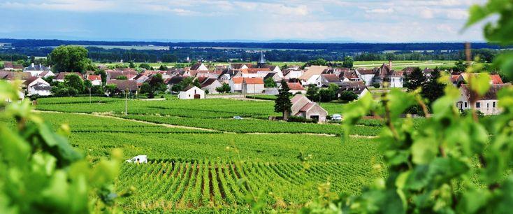 Το οδοιπορικό του Γιώργου Φλούδα στη Βουργουνδία συνεχίζεται με τους ναούς του Chardonnay: τα χωριά Puligny και Corton.