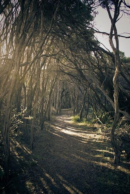 Wilson Promontory Park, VIC