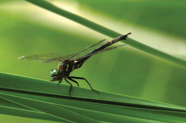 10 Surprisingly Brutal Facts About Dragonflies - LIstverse