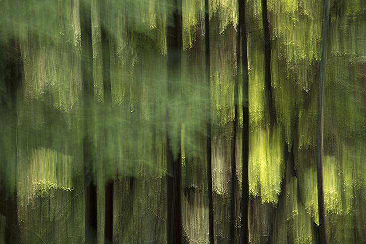 "KIMBERLEY FRENCH: forest breathing, Stanley Park, 2014 Photograph on Wood with Resin,  Original 36˝ × 54˝ AP 14.75"" x 21.5"""