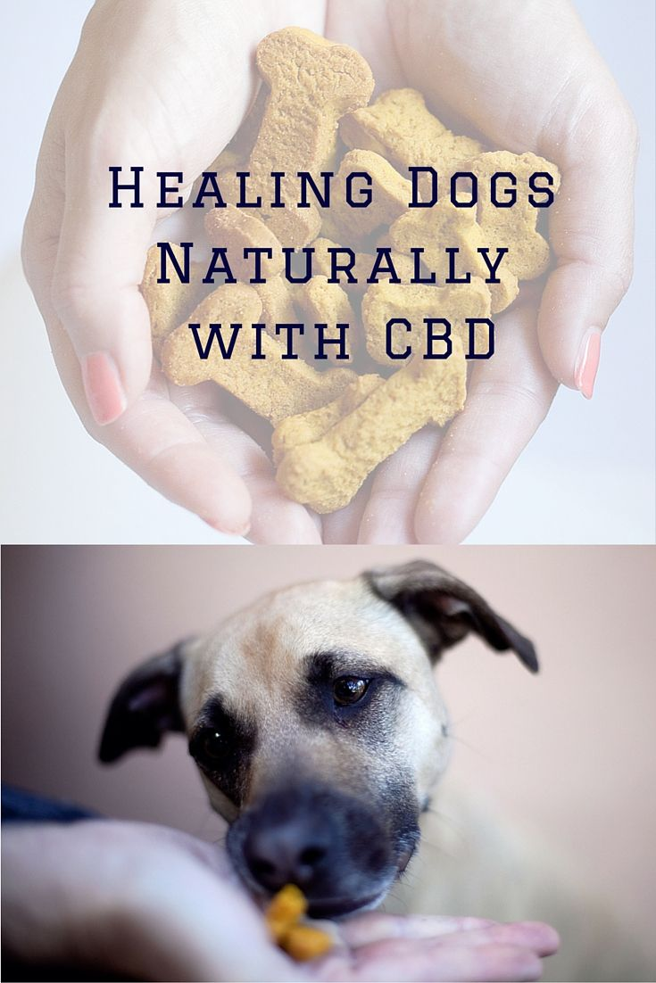 CBD in Dog Treats? Yes, there is such a thing! You can find them in Treatibles Dog Treats while help dogs holistically. Available in Pumpkin & Blueberry for all size dogs