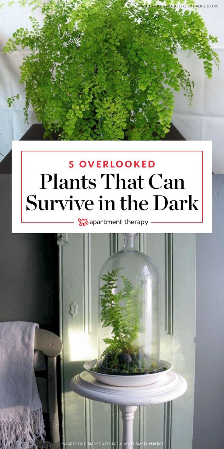 De 796 B Sta Plant Filled Homes Bilderna P Pinterest