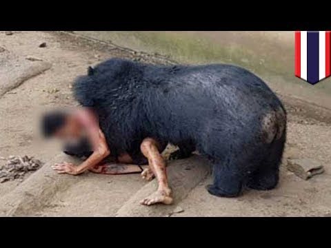 Bear attack: tourist in Thailand viciously mauled by Asian black bear after teasing it - TomoNews - YouTube