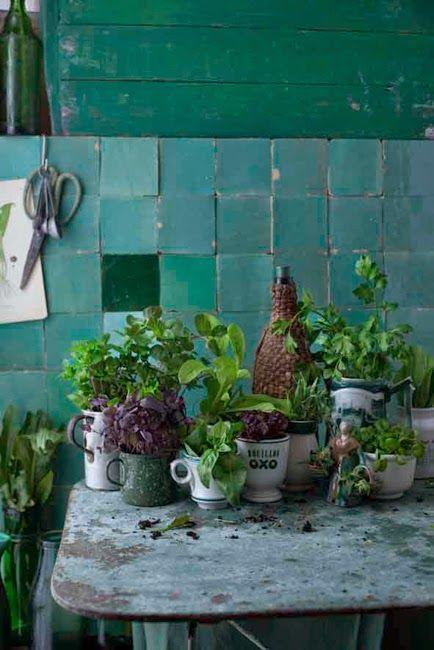 Basilic , menthe , quelques carreaux turquoise Zellige et un mur en bois rustique réhaussé de vert
