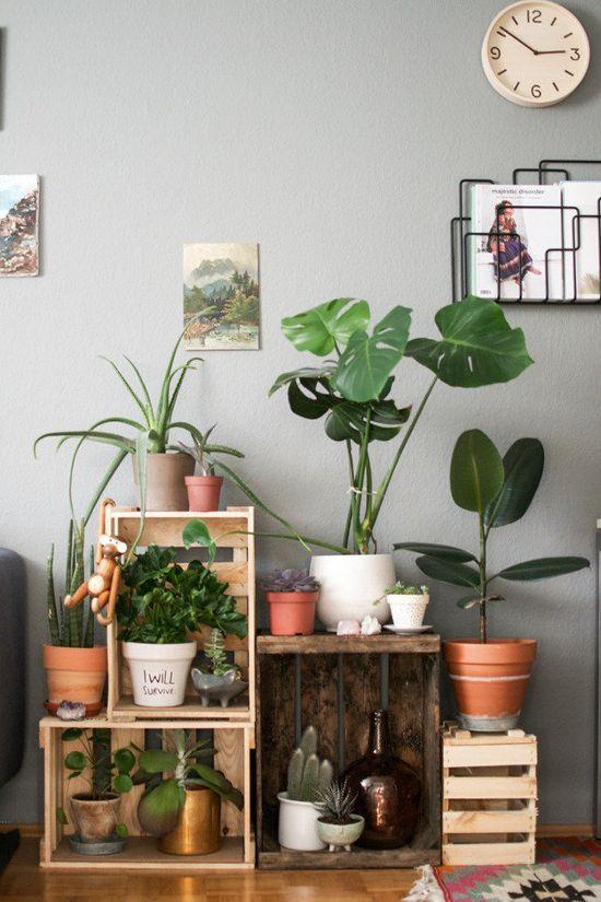 Plant decoration indoor