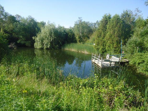 Our pond and accessible floating dock