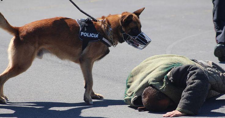 """El PNV rechaza la """"alarma generada"""" por el PSE tras fracasar el contrato de perros policía"""