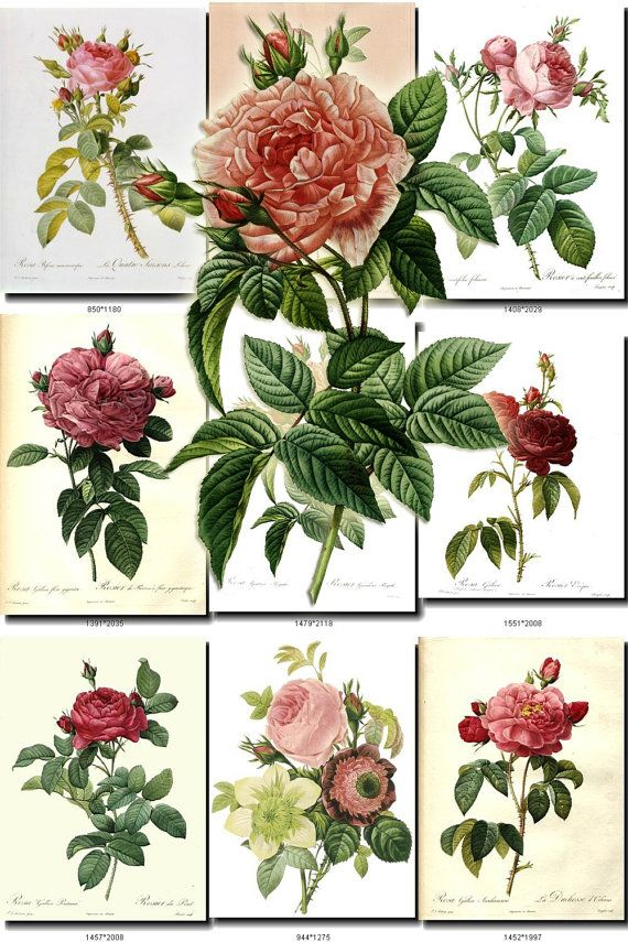 Roses 1 And Lilies Collection Of 80 Vintage Images Pedants Botanical Pictures High Resolution Digital Download Printable Beautiful Lily In 2020 Vintage Images Vintage Botanical Prints Image