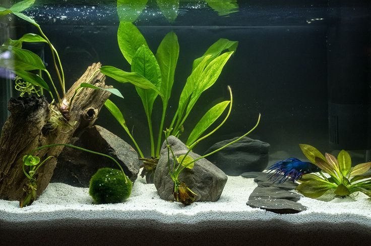 please Post Pics of your bettas home here! - Page 1173