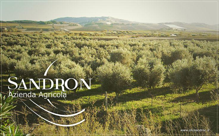 Naro - Azienda Agricola Sandron