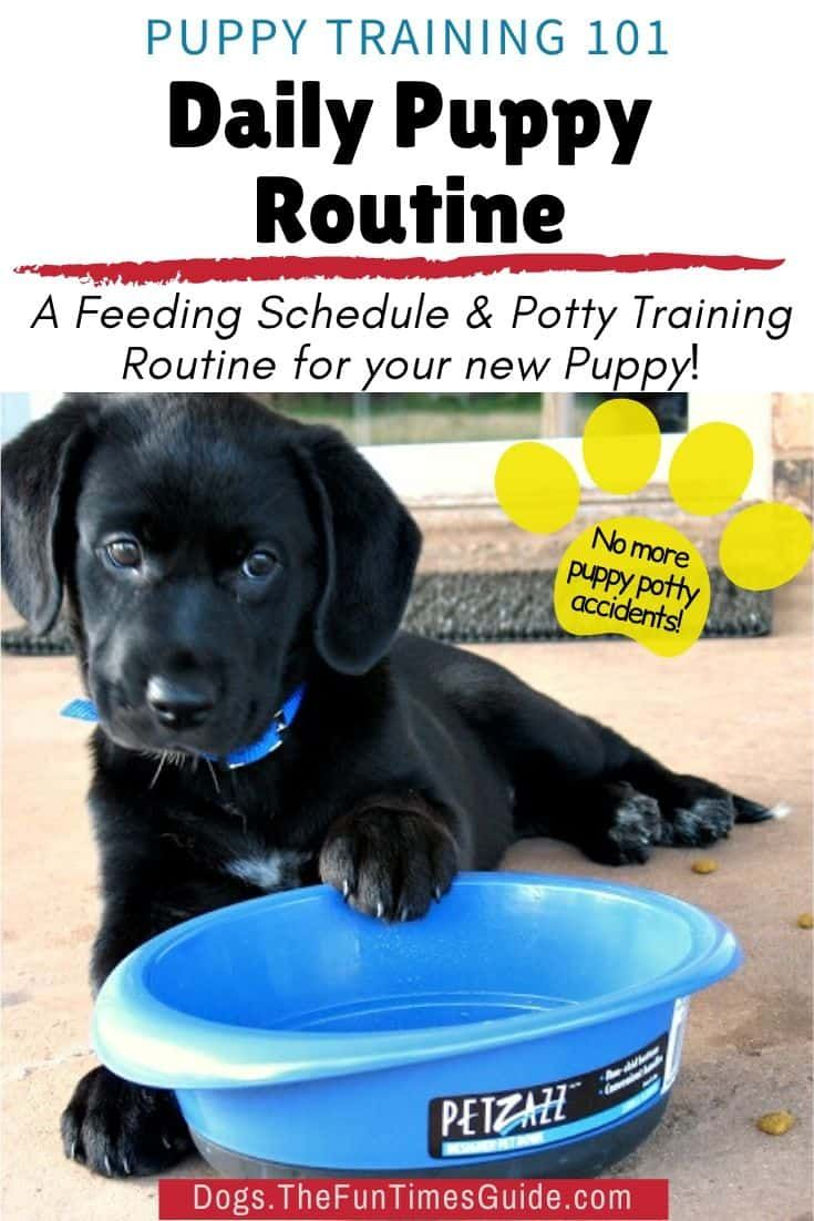 A Dog Routine For New Dog Owners Why How To Come Up With A Puppy Feeding Schedule And Potty Routine For Your Dog In 2020 Puppy Feeding Schedule Potty Training
