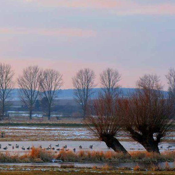 Again no white christmas  instead the snow is melting into big lakes in the meadows // Schmuddelwetter Stimmung am See statt weisser Weihnacht   #regionvogelsberg #traishorloff #hungen #utphe #vogelsberg_fotos#vogelsberg #vulkanregionvogelsberg #oberhessen #visithessen #ig_hessen #kreis_anzeiger #winterstimmung #Iheartnature #tree_magic #tree_captures #tv_monotones #lovethisplace #wintertime #landscape in #autumncolours #landscaper #nature_seekers #natureseeker#winterwounderland…