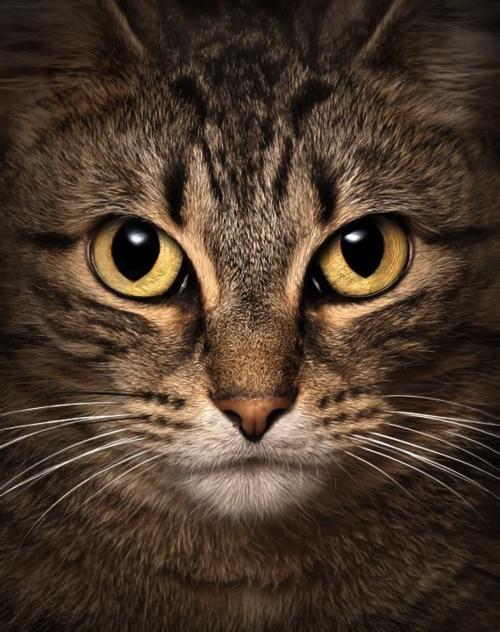 ✯ Beautiful Eyes ✯Funny Kitty, Beautiful Cat, Kitty Cat, Eye Photography, Tabby Cat, Cat Eyes, Cat Women, Kitty Kat, Beautiful Eye