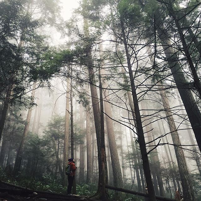 54 best images about BC Forests + Trees on Pinterest