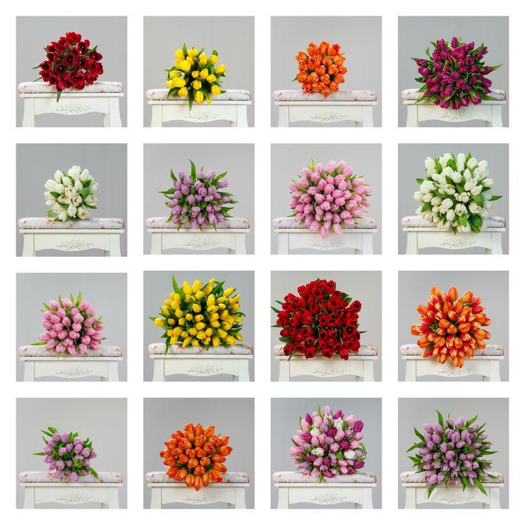 #flori #orasulflorilor #lalele #tulips #sweet #perfectflowers #inspiration #buchete #presents #bestflowers #beautiful #colours #spring #springflowers