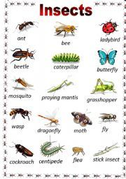 list of insect names insects pinterest english. Black Bedroom Furniture Sets. Home Design Ideas