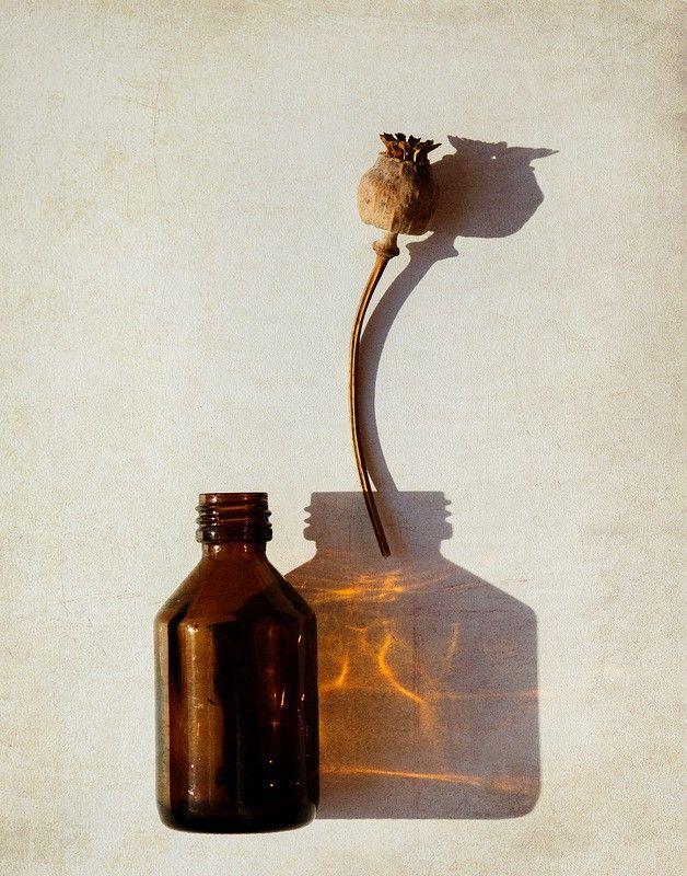 Коллекция фотоидей! Поставьте цветок в тень от бутылочки! Автор: Ольга Зарицкая
