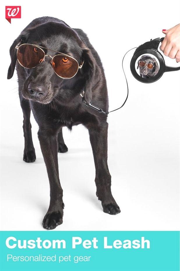 Dog Training Education Zak George Dog Training Videos Dog