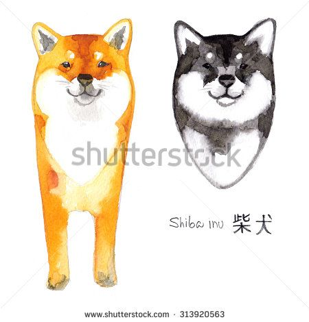 stock-photo-shiba-inu-dog-painted-with-watercolors-on-white-background-japanese-red-dog-shiba-inu-colored-313920563.jpg (450×470)