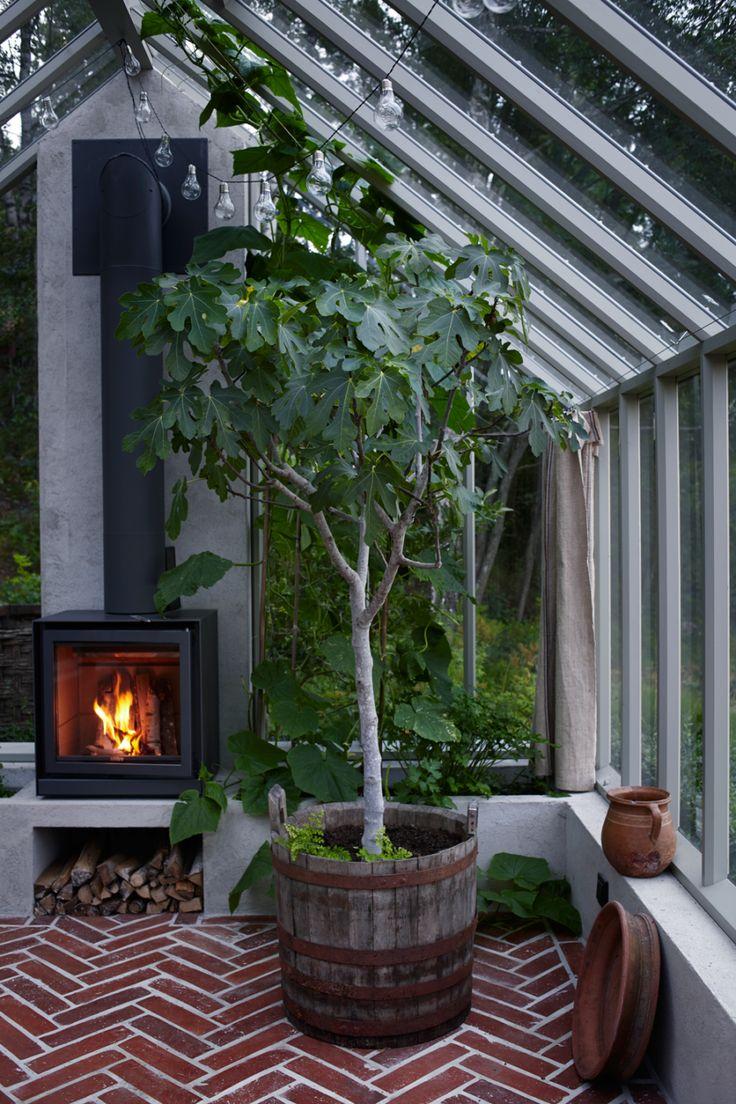 Higuera dentro de casa.... Salon Kika in i Victoria Skoglunds underbara växthus | Residence