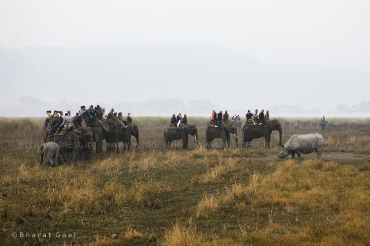 A group of Elephants and One-Horned Rhinoceros
