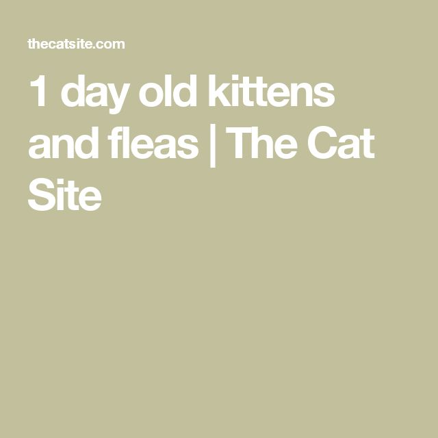 1 day old kittens and fleas | The Cat Site