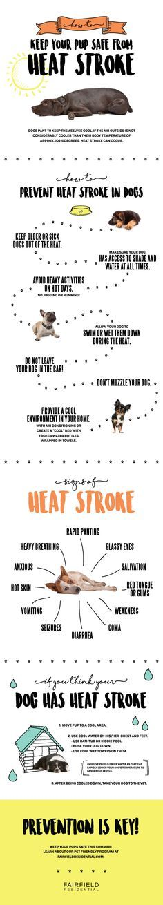♥ Dog Care Tips ♥  Take care of your pup in the summer heat.