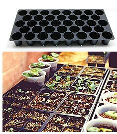 Starting Vegetable Seeds Indoors That T H R I V E! |