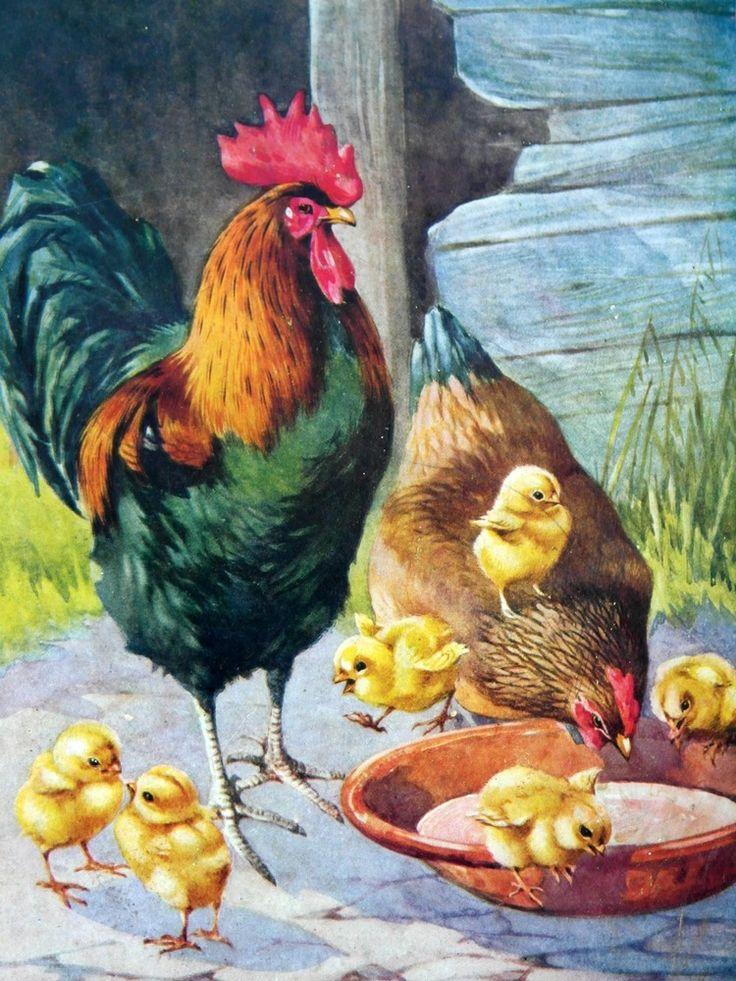 Петушок курочка цыпленок картинка