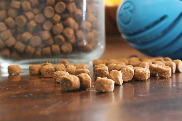Slow down hungry pups by placing kibble inside a treat dispensing toy like the one found in this months OshDog box.